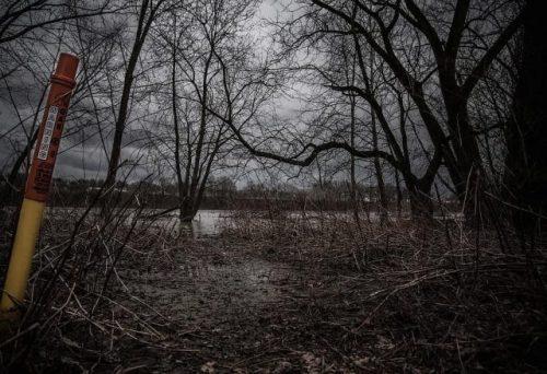 Skrytá stránka černobylských hub: Budou nás chránit před kosmických zářením?