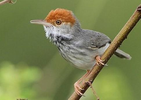 Objeven nový ptačí druh