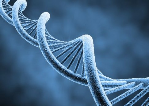 Yetti neexistuje. Odhalila to analýza DNA