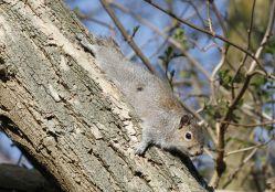 Nová studie odhalila globální ohniska výskytu nepůvodních rostlin a živočichů