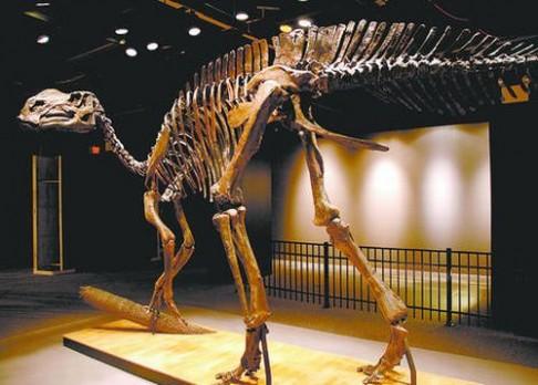 Jak dinosauři chodili?
