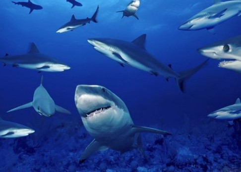 Z oceánů mizí žraloci