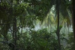 Na Zemi roste přes 60 tisíc druhů stromů