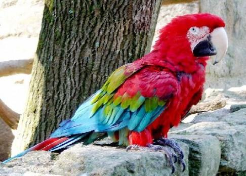 Proč je v Jižní Americe více ptačích druhů?