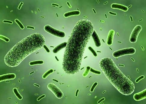 Před alergiemi ochrání bakterie
