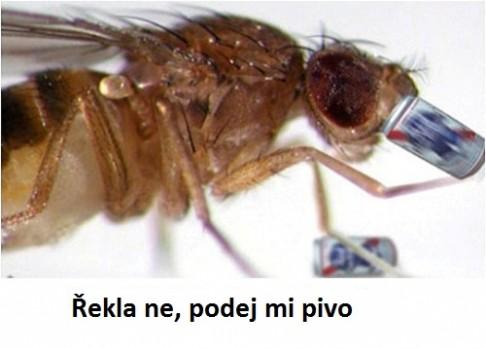 Opilé larvy se lépe učí