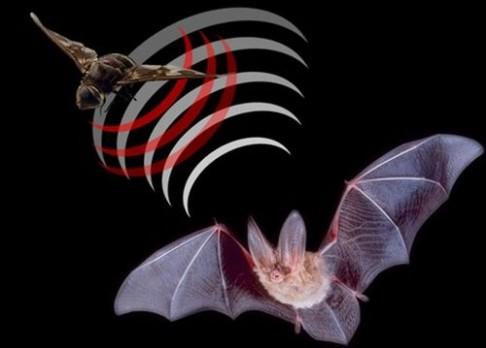 Změřte si místnost zvukem. Jako netopýr…
