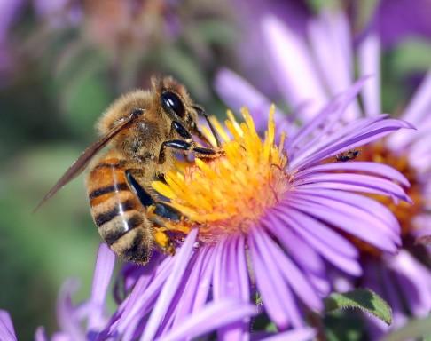 Co u včel vyzkoumal robotický špión?