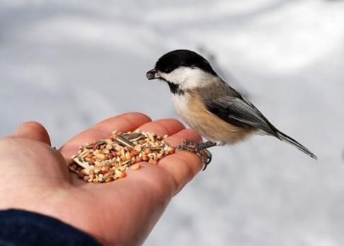 Jarní sníh ptákům nesvědčí – přikrmujte!