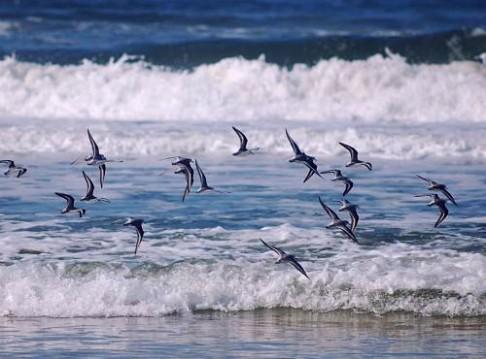 Plži létají stopem