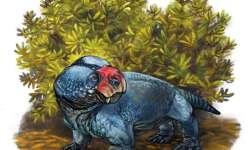 Bulbasaurus phalloxyron, nikoliv pokémon, ale nově objevený terapsid