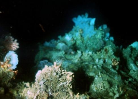 Korály chladomilné zakořenily u Grónska