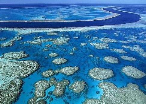 Masivní úbytek největšího korálového útesu