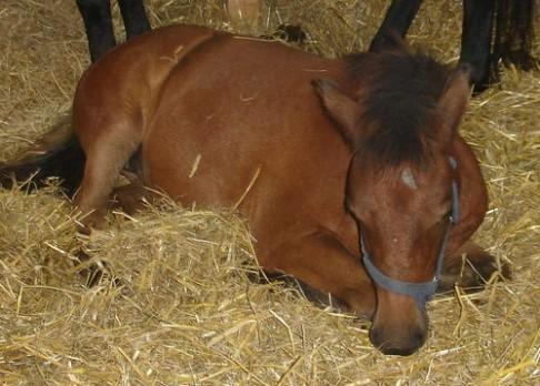 Enzymy z koňských střev zlevní biopaliva