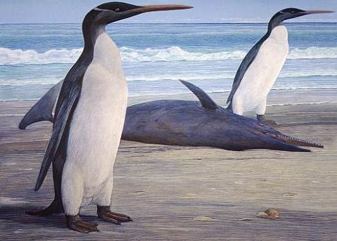 Puzzle největšího tučňáka složeny