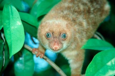 1000 nových druhů z Nové Guiney