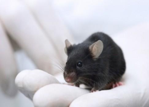 Konec testování léků na zvířatech?