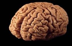 Byly objeveny geny inteligence?