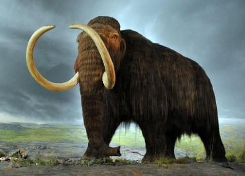 Zmrzlý mamut obsahoval zachovaný mozek