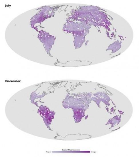 První fluorescenční mapa vegetace