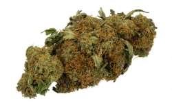 Nový dechový test na marihuanu