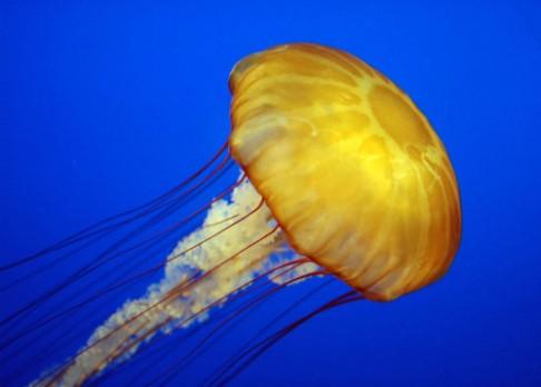 Ekologické plenky jsou vyrobeny z medúzy