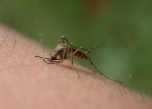Boj s komáry se vede z vesmíru