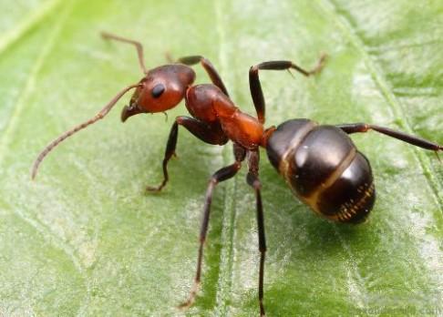 Mravenci inspirují vynálezce