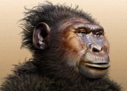 """Paranthropus hezky """"obojživelný"""""""