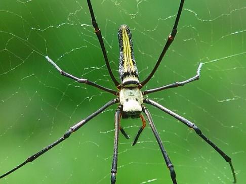 Pavoučí repelent proti mravencům
