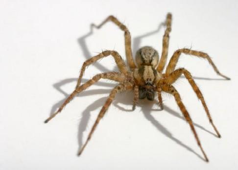 V Macoše objevili neznámého pavouka
