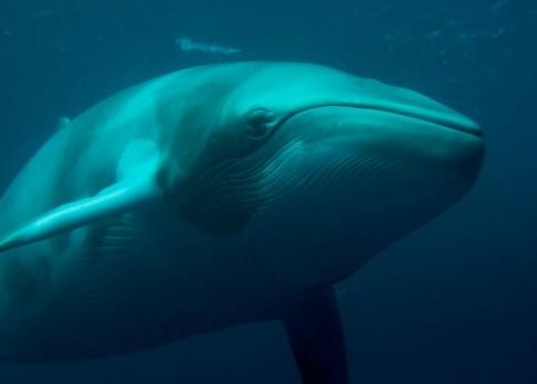 Vědci identifikovali tajemný zvuk ledového oceánu