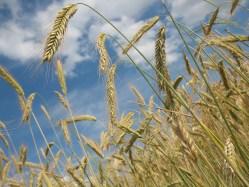 Podaří se najít potraviny pro budoucnost?