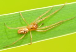 Na Moravě byl objeven nový druh pavouka