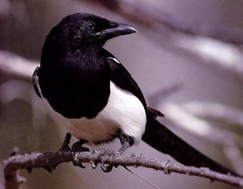 Města přejí chytrým ptákům