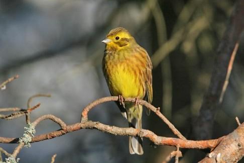 Přijďte s ČSO přivítat ptačí zpěv