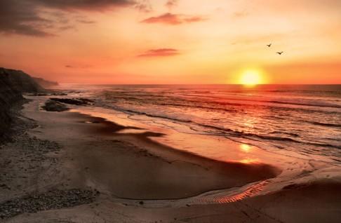 Oteplování zmenšuje mořské živočichy