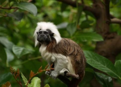 I opičky umějí šeptat