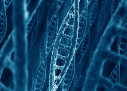 Rosettská deska v genetické laboratoři
