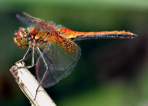 Hmyz mění barvu kvůli oteplování