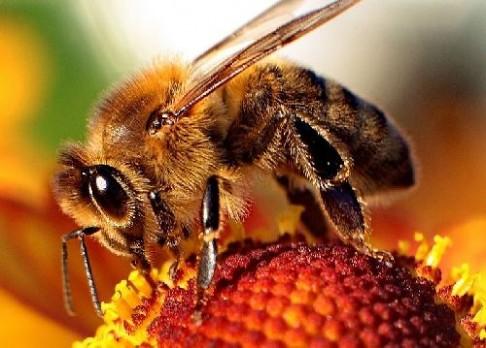 Umí včely mluvit?