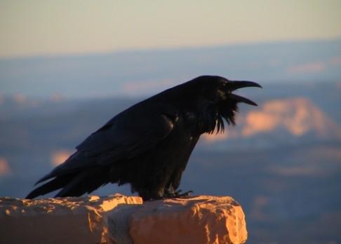 Festival ptactva již 5. a 6. října