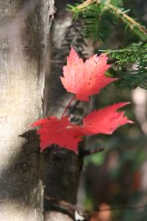 canadian fall