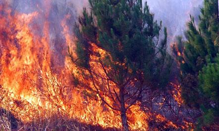 Emergjencat Civile  8 vatra zjarri në 24 orët e fundit