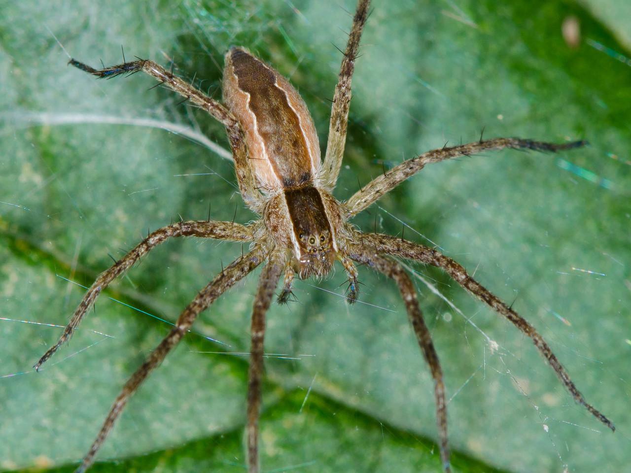 Uma aranha Web berçário.