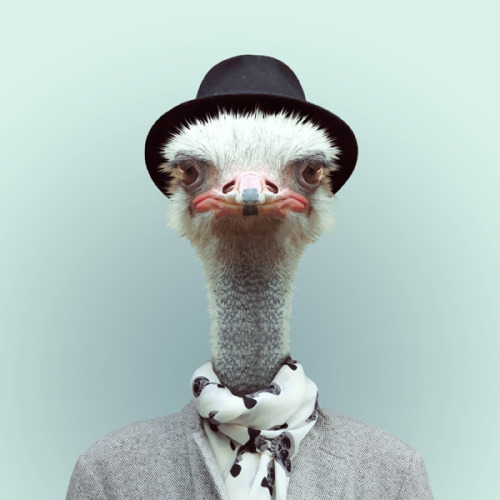 OSTRICH by Yago Partal for ZOO PORTRAITS