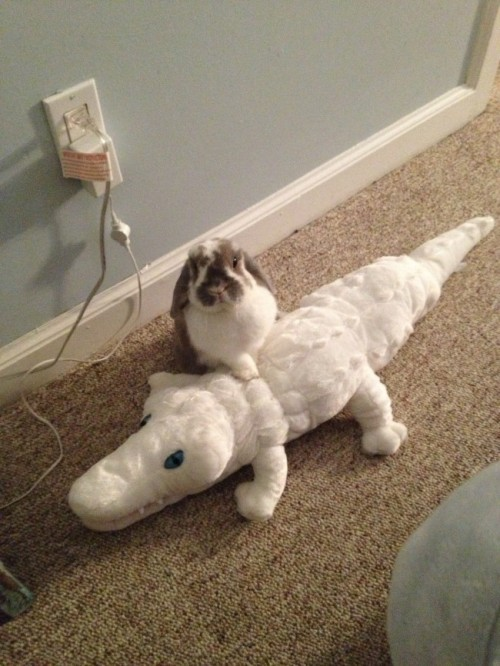 fruitsgarden: as u can see i have defeated this whole crocodile