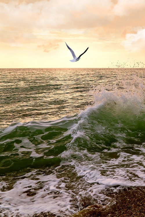 <br /> OCEAN SEAGULL ~ By Marine Traffic</p> <p>LET'S FLY AWAY FROM THE FURY OF THE WAVES,<br /> FROM THE TURMOIL OF EVERYDAY LIFE,<br /> FROM PRYING EYES,<br /> AND OUT INTO THE WIDE OPEN WORLD.