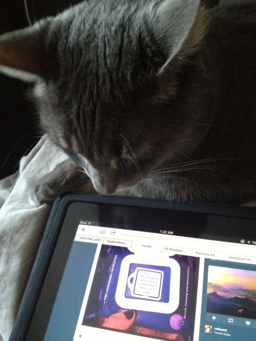 Just 2 girls catching up on tumblr in the morning.