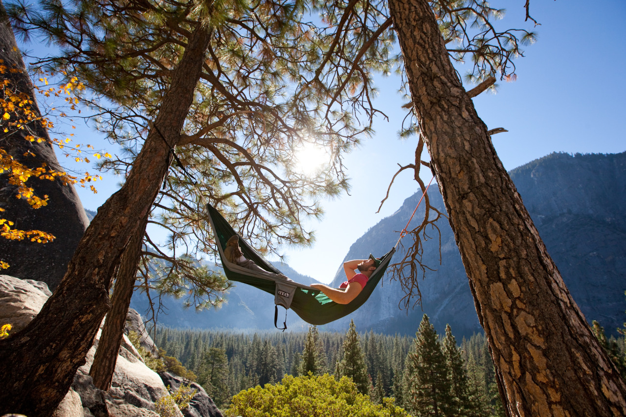 Beauty Tree Nature Cali Adventure Explore Extreme Hike